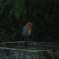 robin_jan09