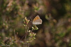 small_copper_side